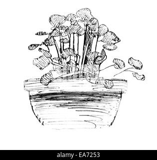 Flower pot, black and white ink sketch. - Stock Photo