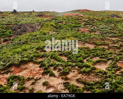 Geothermal field of Gunnuhver, Reykjanes Reykjanes Peninsula, Iceland (Ísland). - Stock Photo