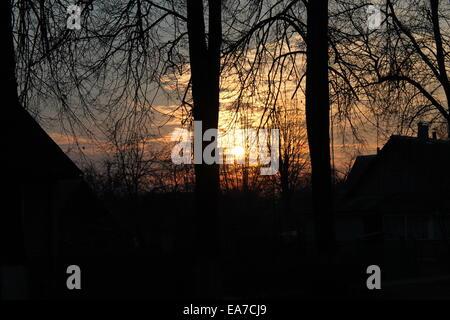 beautiful autumn golden sunset through black silhouettes of trees - Stock Photo