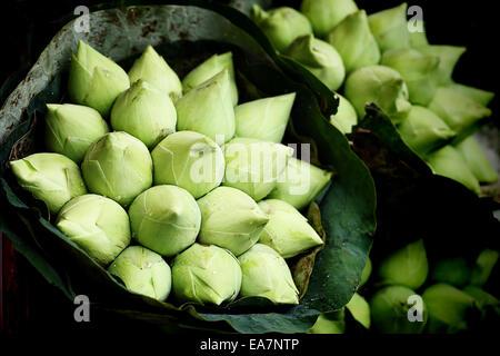 The lotus very fresh at street market - Stock Photo