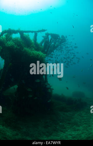Photograph of the HMS Maori wreck outside Grand Harbor in Valletta, Malta, Mediterranean Sea. - Stock Photo