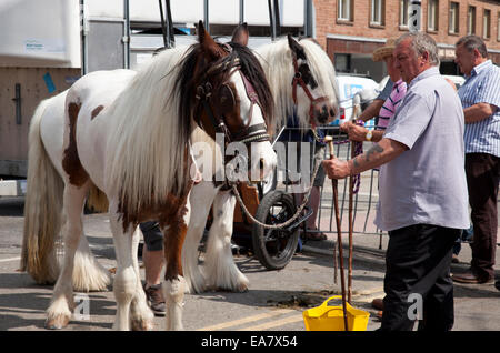 The Appleby Horse Fair, Appleby-In-Westmorland, Cumbria, England, U.K. - Stock Photo