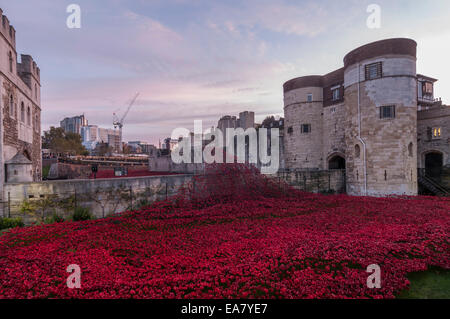 London, UK, 8 November 2014.  Thousands of visitors arrive at dawn at the Tower of London to see, ceramic artist, - Stock Photo