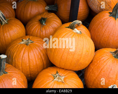 A heap of pumpkins on display. - Stock Photo
