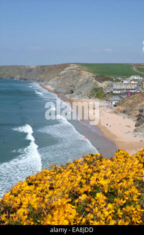 View from clifftop by yellow flowering gorse looking down at beach with peaple on sand & in sea surfing Watergate - Stock Photo