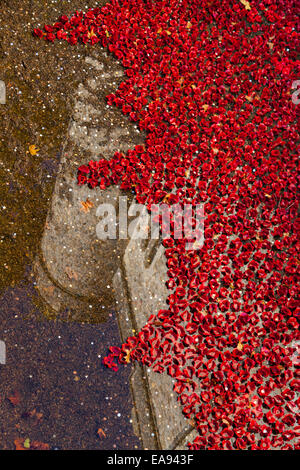 London, UK, 9th November 2014, Remembrance Sunday poppy display at the Tower of London. As the sun comes out in - Stock Photo