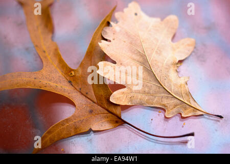 Two fallen leaves lie on a glass table in late autumn. - Stock Photo