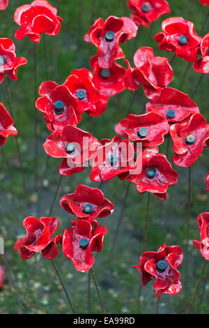 Tower Of London River Of Poppies Stock Photo Royalty Free Image - Tower of london river of poppies