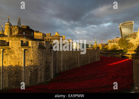 Side of Tower of London with Paul Cummins's poppies in the moat - Stock Photo