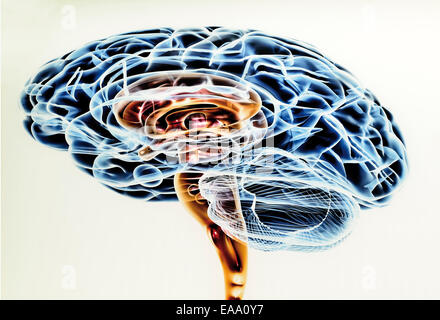 Spain, Burgos: Scientific drawing of the human brain in the Museum of Human Evolution - Stock Photo