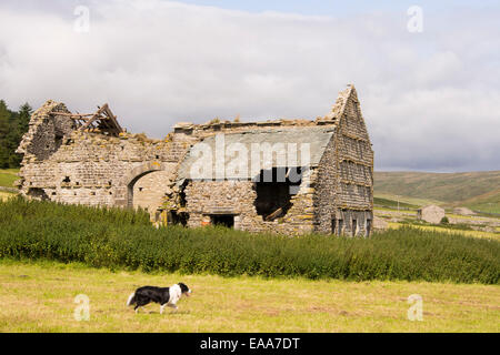 Littondale in the Yorkshire Dales with a derelict barn, UK. - Stock Photo