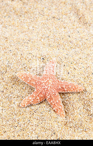 zen spa river rocks and shells on sand - Stock Photo