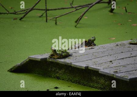 Turtles saying a prayer - Stock Photo