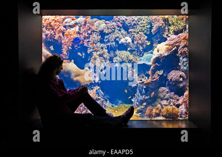 Horizontal portrait of a tourist looking at tropical fish in an aquarium. - Stock Photo