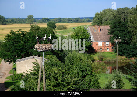 Stork nests in Werben / Elbe, Altmark, Sachsen-Anhalt, Germany, Europe - Stock Photo