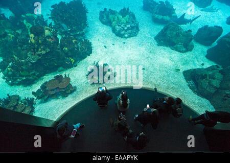 Horizontal aerial view of visitors at Oceanario de Lisboa aquarium in Lisbon. - Stock Photo