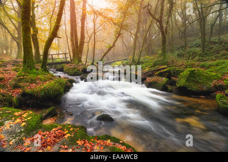Misty Autumn morning at Golitha Falls where the River Fowey flows through woodland on the edge of Bodmin Moor in - Stock Photo