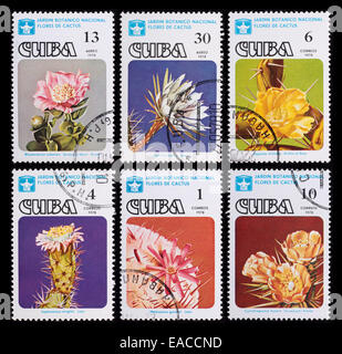 Cuba - circa 1978: A post stamp printed in the Cuba shows image of cactuses, series Cactuses, circa 1978. - Stock Photo