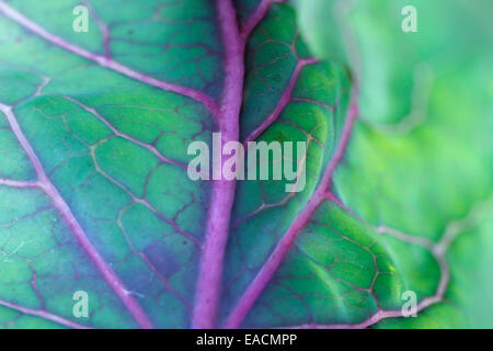 cabbage leaf extreme close-up - Stock Photo