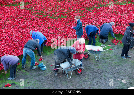 London, UK. Wednesday 12 November 2014. Volunteers removing some of the 888,246 ceramic poppies which formed the - Stock Photo