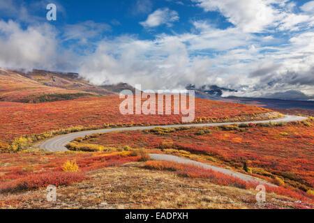 Denali park road winds through the crimson tundra of Denali National Park, Interior Alaska - Stock Photo