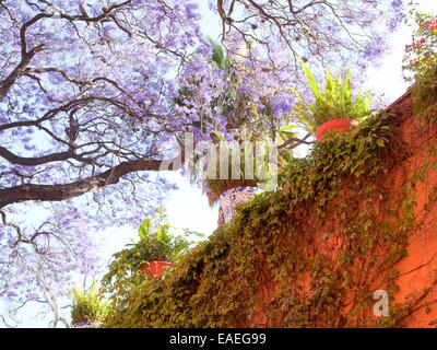 plants on wall of Mexican garden with flowering trees - Stock Photo