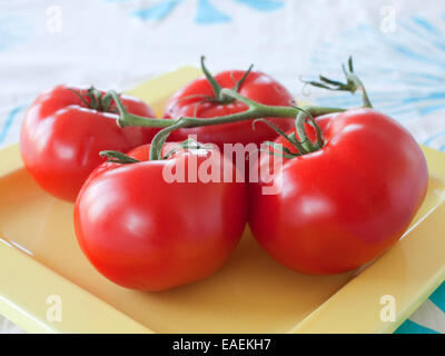 Four ripe tomatoes on a plate - Stock Photo