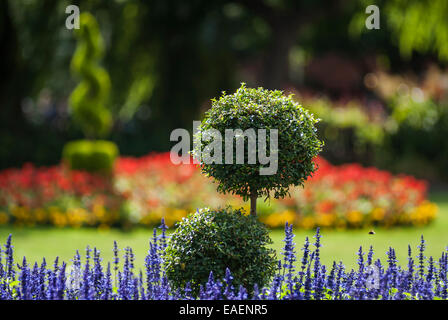 An ornamental park garden with lavender flowers and box tree in the forground and topiary, lawn, bright flowers - Stock Photo