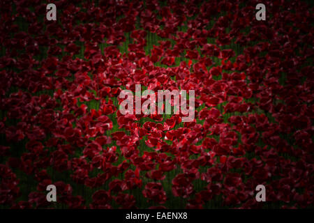 'Amongst the many the individuals' -  a vignette of the 888,246 poppies in the 'Blood Swept Lands and Seas of Red' - Stock Photo