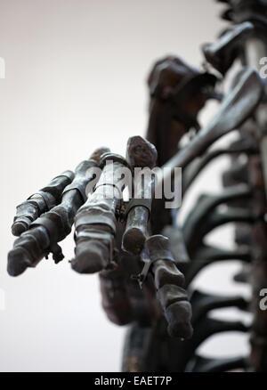 dinosaur skeleton palm bones closeup in horror style view - Stock Photo