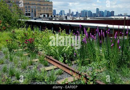 NYC:  Flowers grow amidst the old railway tracks at the High Line elevated park in the West Village with views across - Stock Photo