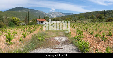 An unkept path to a vinyard in the mountains near Fragata, Kefalonia. - Stock Photo