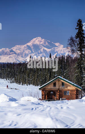 Husky,Alaska,Log Cabin,Sled Dog,iditarod race - Stock Photo