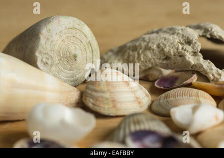 Sea cockleshells of a different form on a wooden surface - Stock Photo