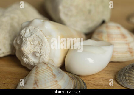 Some sea cockleshells located on a wooden surface - Stock Photo