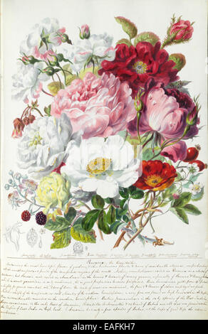 Various species of Rosa, Rubus, Fragaria, Geum by Elizabeth Twining - Stock Photo