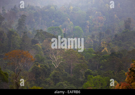 Colorful foliage on trees in pristine tropical rainforest in Taman Negara National Park, Malaysia - Stock Photo