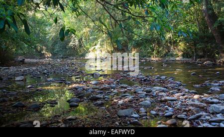 Freshwater stream and tropical rainforest in Taman Negara National Park, Malaysia - Stock Photo