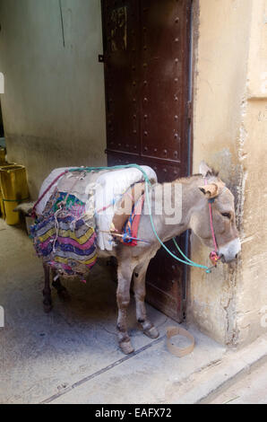 Donkey in Fes medina, Morocco - Stock Photo