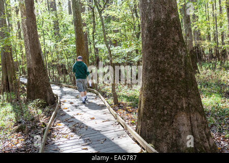 A man walks the boardwalk loop winds through bald cypress trees at Congaree National Park, the largest intact expanse - Stock Photo
