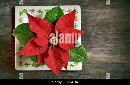 red Christmas flower isolated on old wooden background - Stock Photo