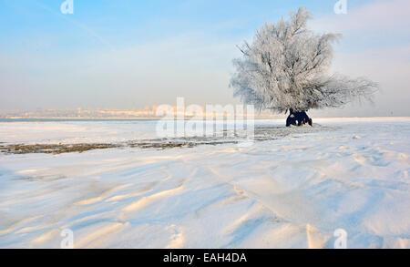 frozen tree on winter field in morning time - Stock Photo