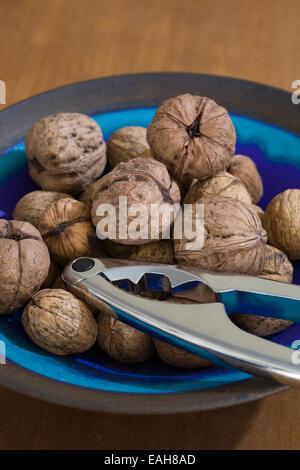 Juglans regia fruit. Freshly picked walnuts in a blue bowl. - Stock Photo