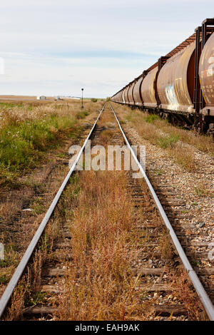 freight grain trucks on former canadian pacific railway now great sandhills railway through leader Saskatchewan - Stock Photo