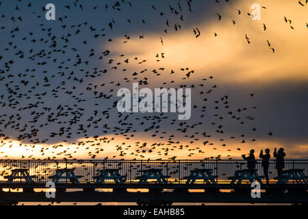 Aberystwyth Wales UK, Saturday  15 November 2014  People standing on Aberystwyth pier at sunset get a close up view - Stock Photo