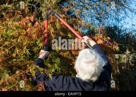 Senior woman gardening using loppers to cut back a garden bush in autumn. UK, Britain. - Stock Photo