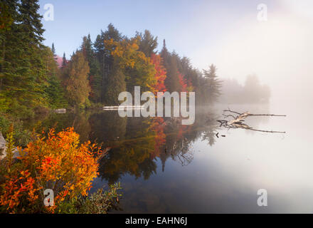 Thick fog and vibrant autumn colours at sunrise in Algonquin Provincial Park, Ontario, Canada. - Stock Photo