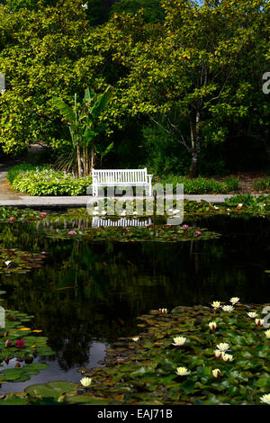 lily lilies pond white garden bench seat seating gardens mount congreve waterford tranquil relax relaxing RM Floral - Stock Photo
