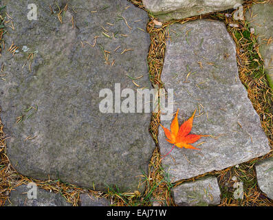 A single leaf gold red orange fall Japanese maple leaf fallen on a paving stone on an autumn day. Copy space with - Stock Photo