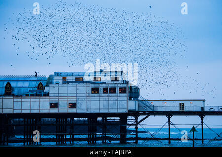 Aberystwyth Wales UK, Sunday  16 November 2014  Aberystwyth's pier in the evening as tens of thousands of starlings - Stock Photo